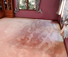 Carpet-drying.jpg