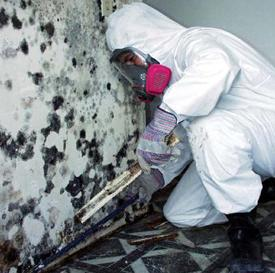 Professional mold removal technician working on black mold.