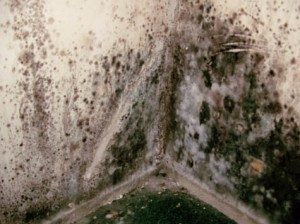 Flood damage in 14617 causes mold.