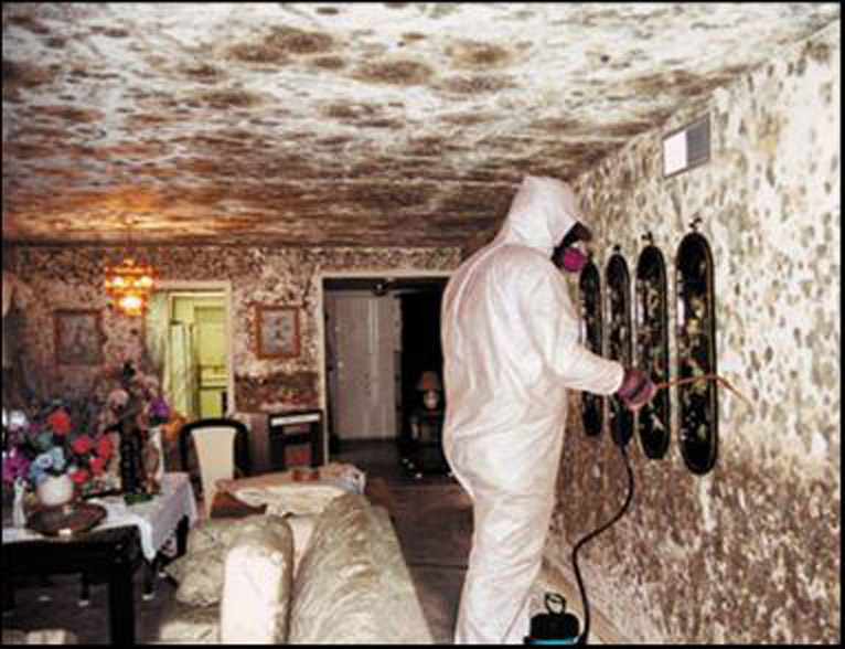 Mold2 Jpg House Mold Symptoms